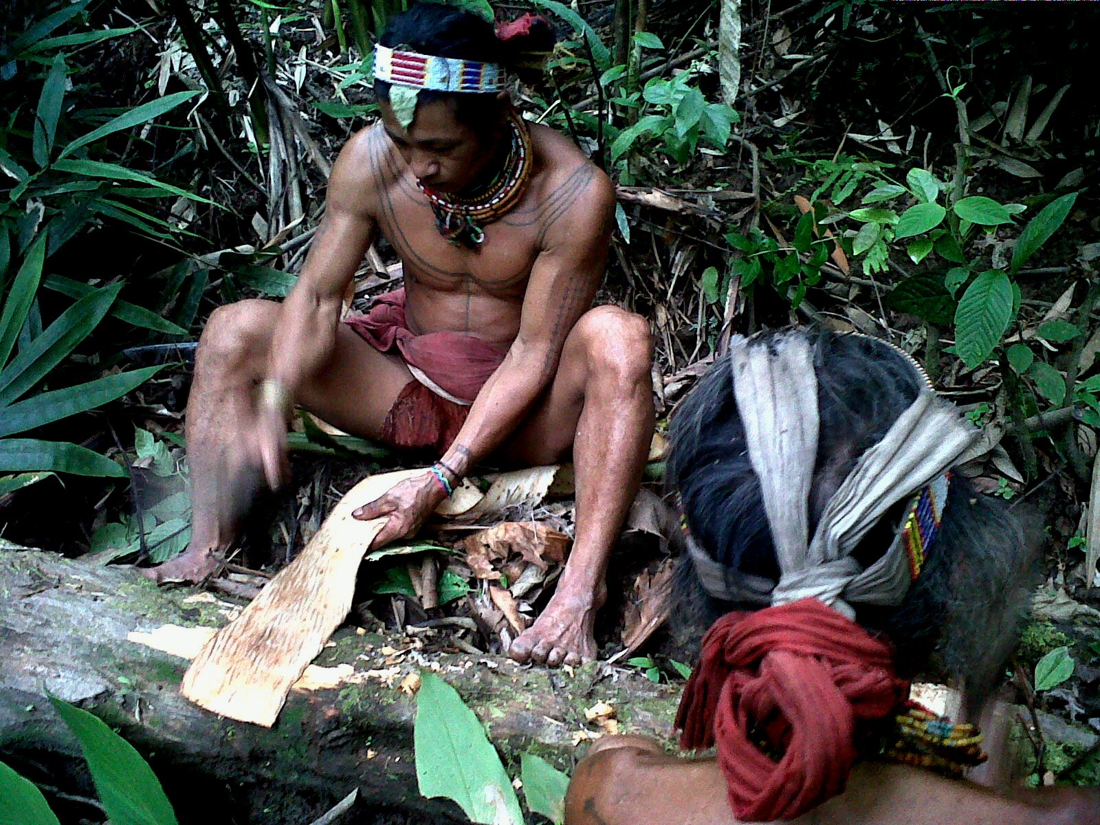 Mentawai Tribe Looking For Sago 3 (2)
