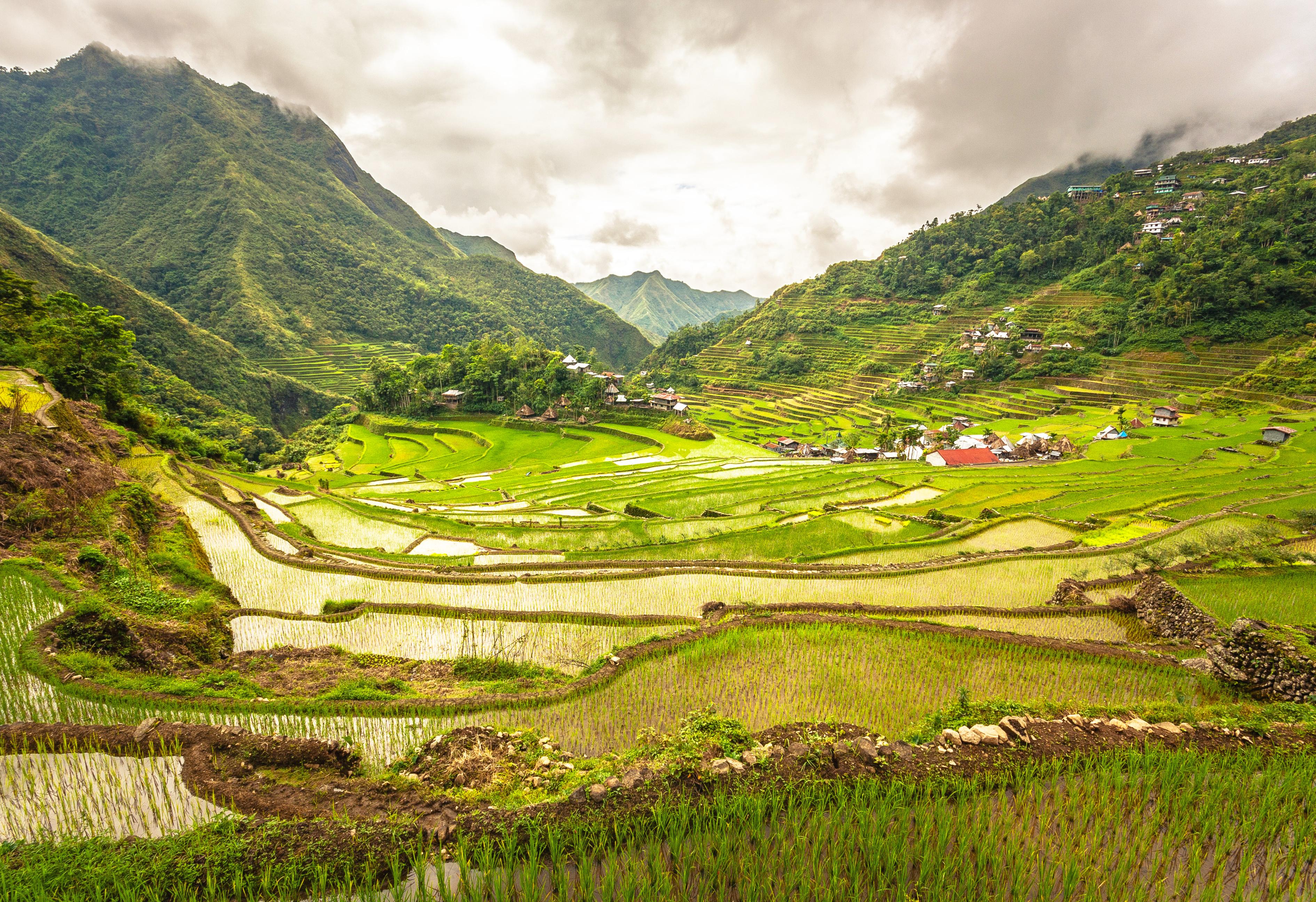 Riceterraces3