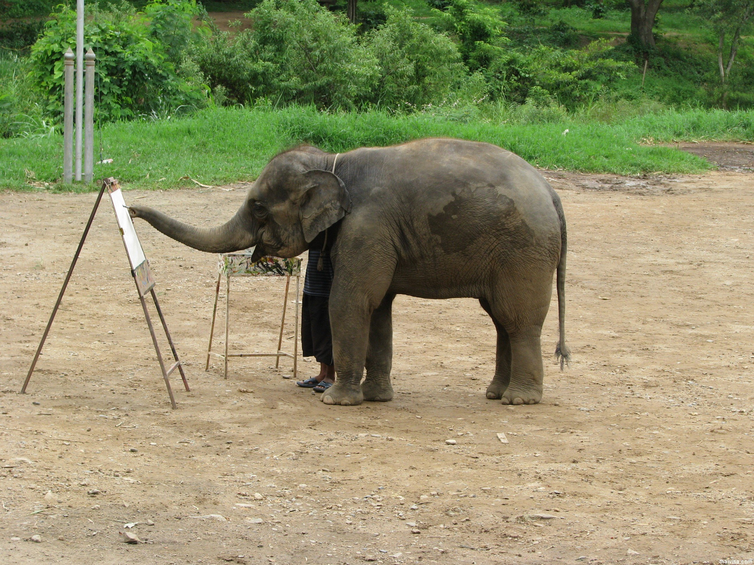 Maetaman Elephant Camp9