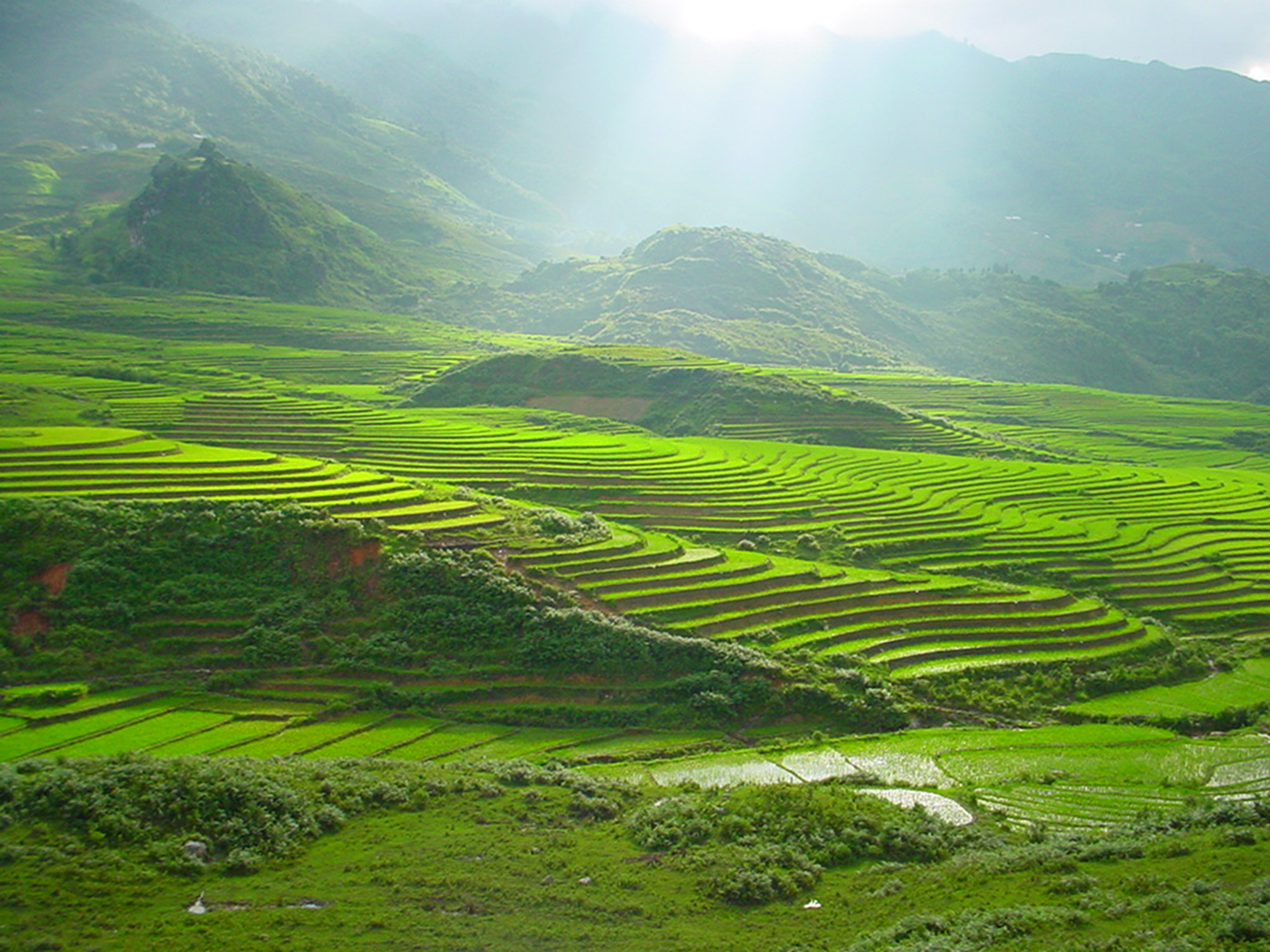 Rice Fields in the North