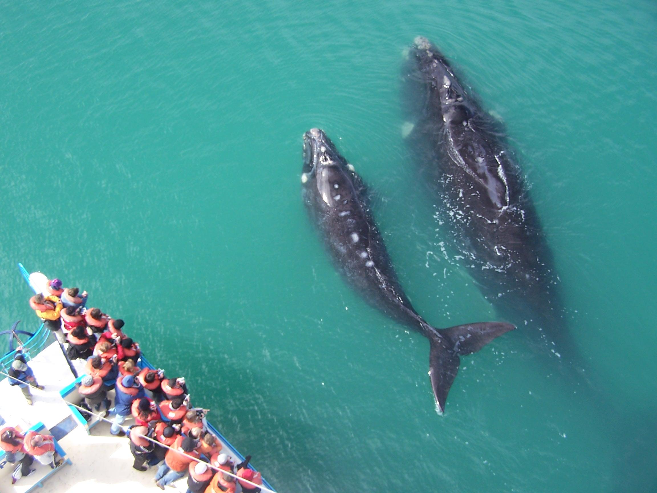 Puerto Madryn (4)