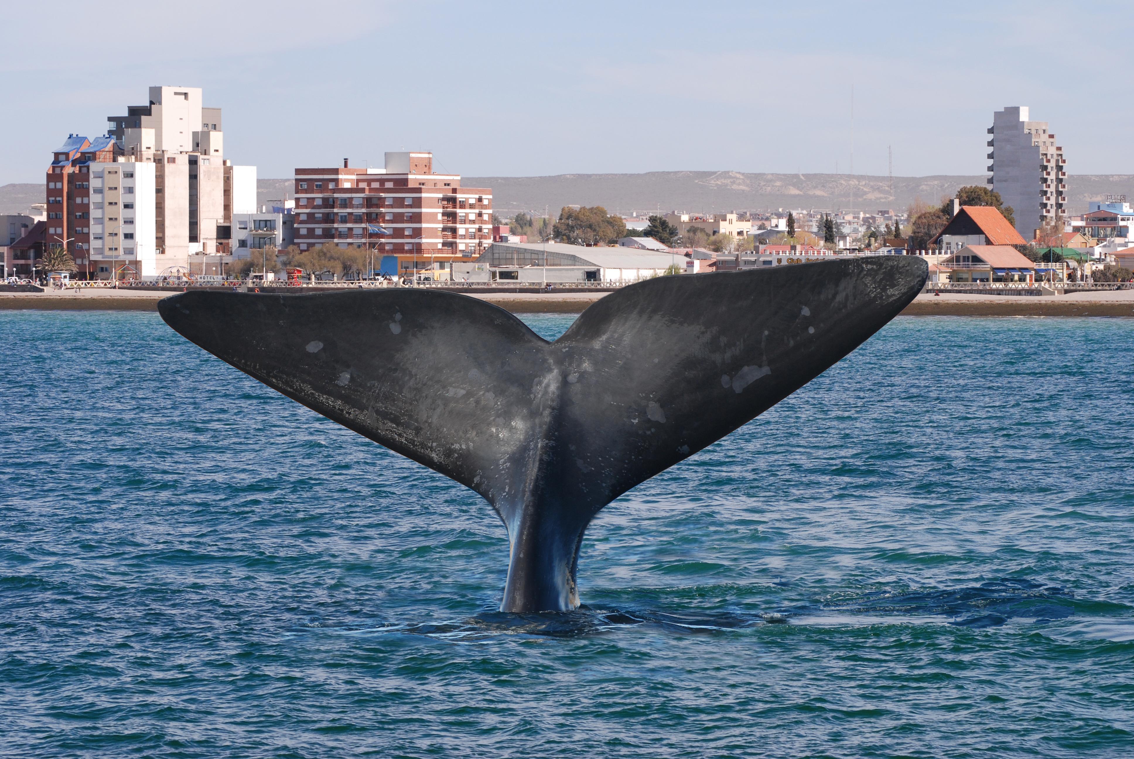 Puerto Madryn (7)