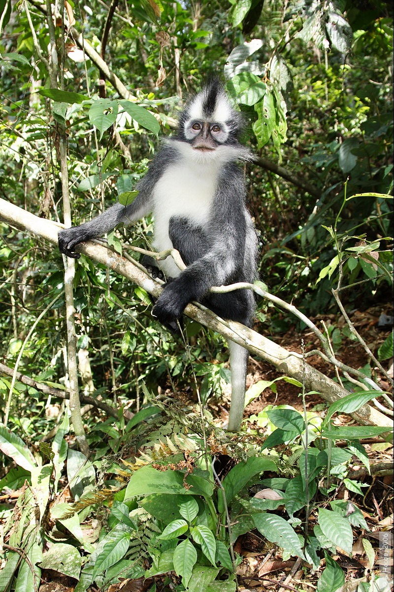 1-155  North Sumatra, NP Gunung Leuser1