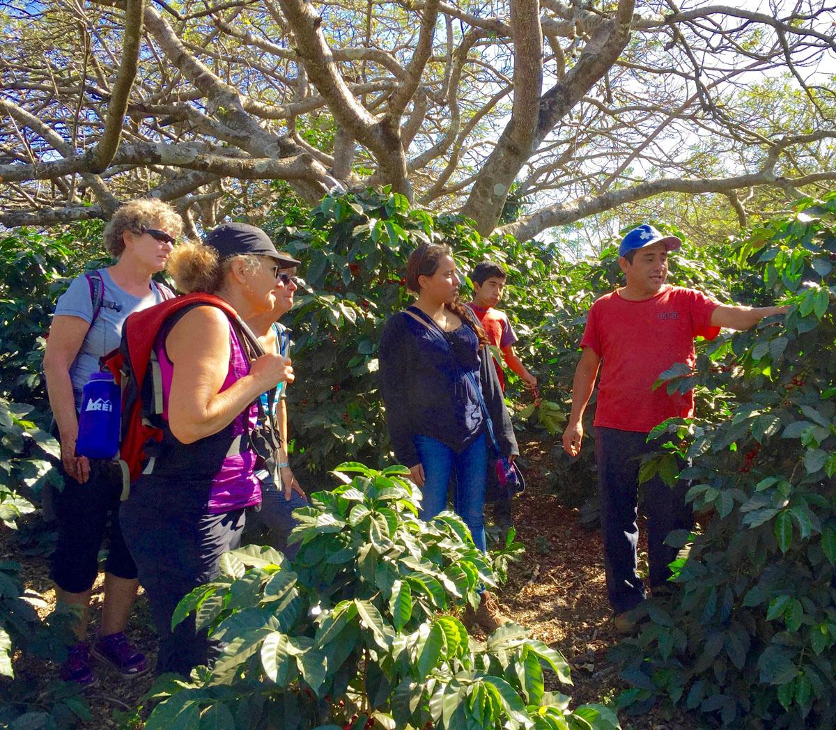 Mayan Community Glamping Trek - Coffee Experience