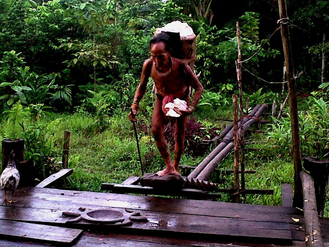 Mentawai Tribe - Collecting Sago