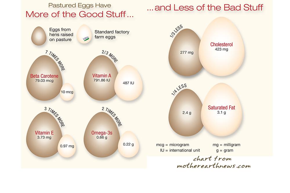 Benefits of Pastured Eggs