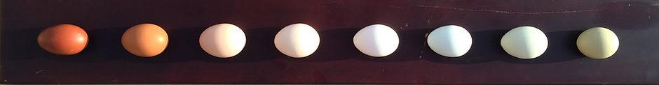 Egg Board.jpg