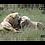 Thumbnail: ATN X-SPOTTER HD 20-80X