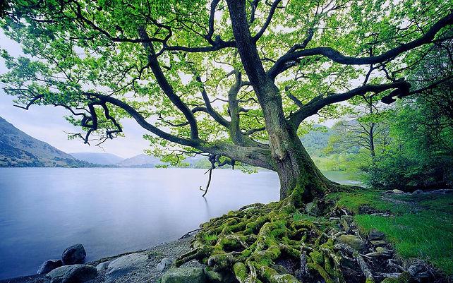 beautiful-tree-and-river.jpeg