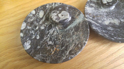 Fossil Dishes