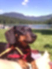 Whistler Dog