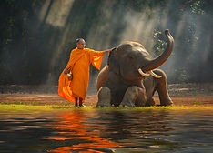 Elephant and Monk ,Surin Thailand.jpg