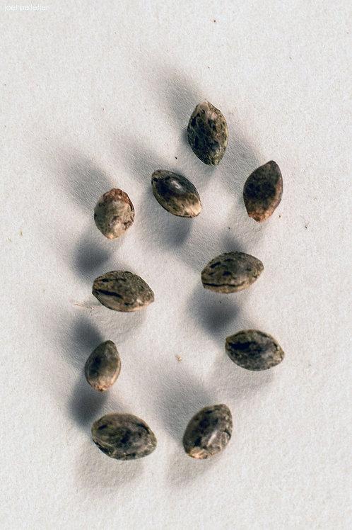 Variety Seed Pack