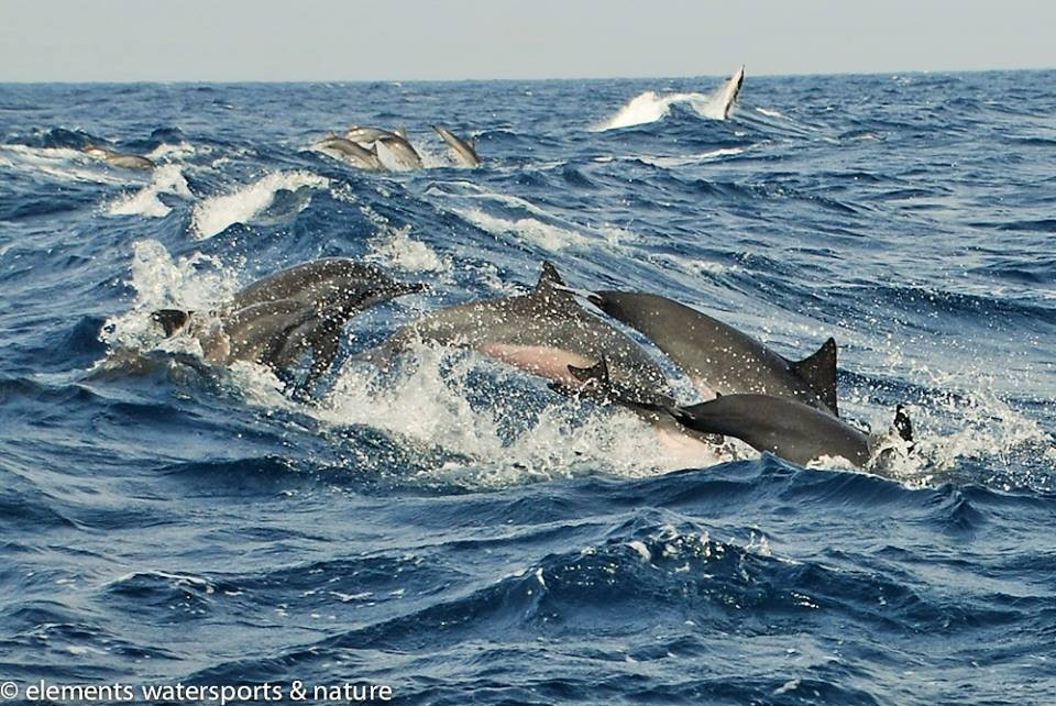Spinner dolphins - just off the shore of Elements Watersports and Nature Resort