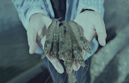 bk3_viaqua_shrimp.jpg