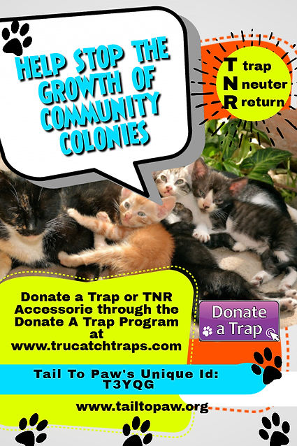 Copy of Animal Rescue Flyer - Made with