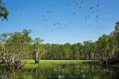 Tabletop Swamp, Litchfield NT