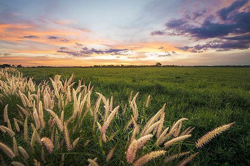 CANVAS PRINT - WIld Grasses - 600 x 400 mm
