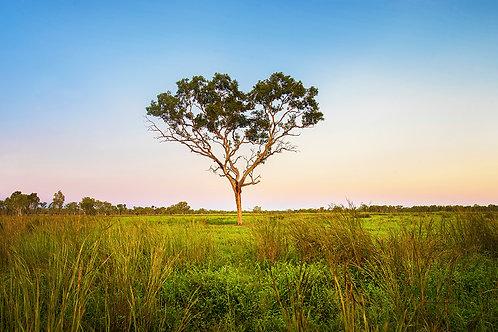 Tree of Love, Katherine NT ~ KR019