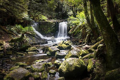 Mount Field, Tasmania