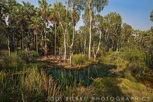 Bitter Springs, Mataranka, NT ~ MT001