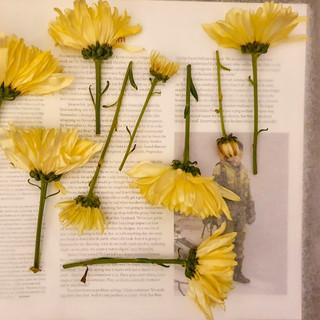 Pressed Flowers on Book
