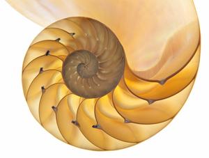 beautiful illuminated nautilus shell