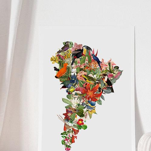 Mapa Flor de Sudamérica Blanco - Lámina