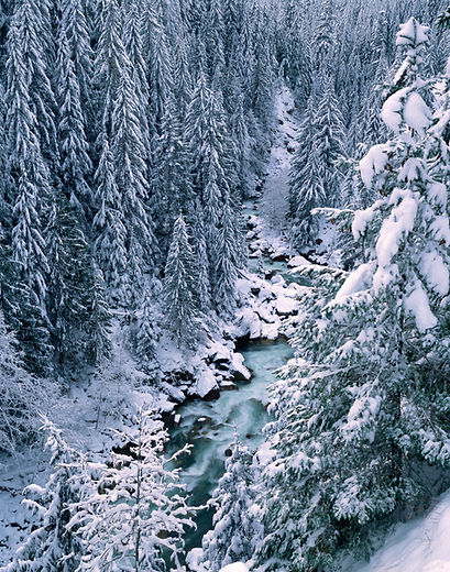 The Nooksack River in Winter, Photo: Brett Baunton