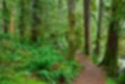 The Horseshoe Bend Trail along the North Fork is a popular scenic hike.  Photo: Brett Baunton