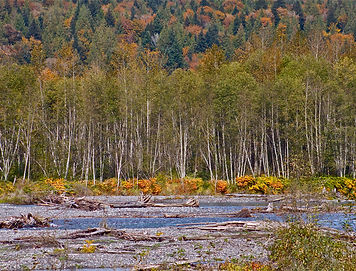 The Nooksack River in the fall.  Photo: Jerry McFarland, Flickr Creative Commons