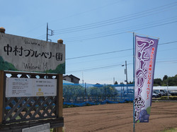 photo77.jpg