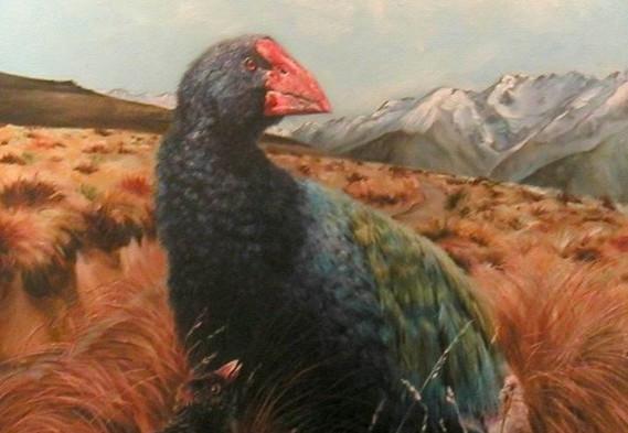 Takahe and chick