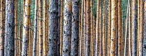 den Wald vor lauter Bäumen trotzdem sehen