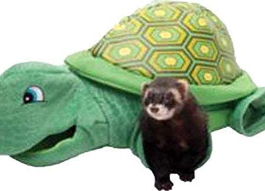 Ferret Turtle Tunnel