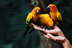 hands-holding-wild-birds-zoo_53876-63246