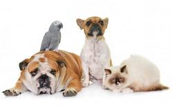 group-pet_87557-2825
