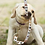 Thumbnail: Sublimated Dog Leash by Reed Evins