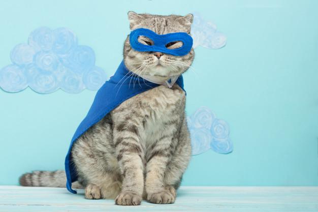 superhero-cat-scottish-whiskas-with-blue