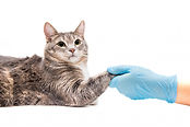 Chronic health problems in cats