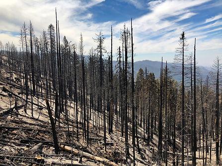 IMG_9079 Yosemite wild fire.jpg