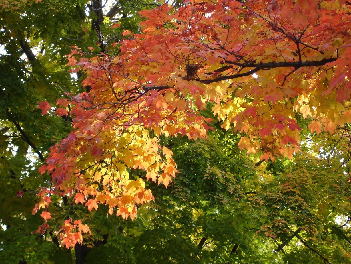 Fall Colors 006 sml.jpg