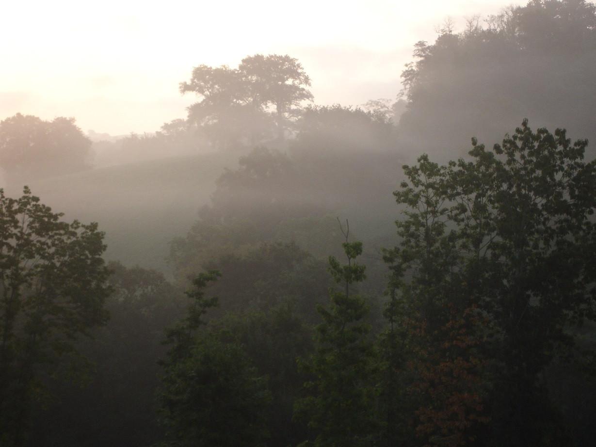 French landscape 2009 morning mist.jpg