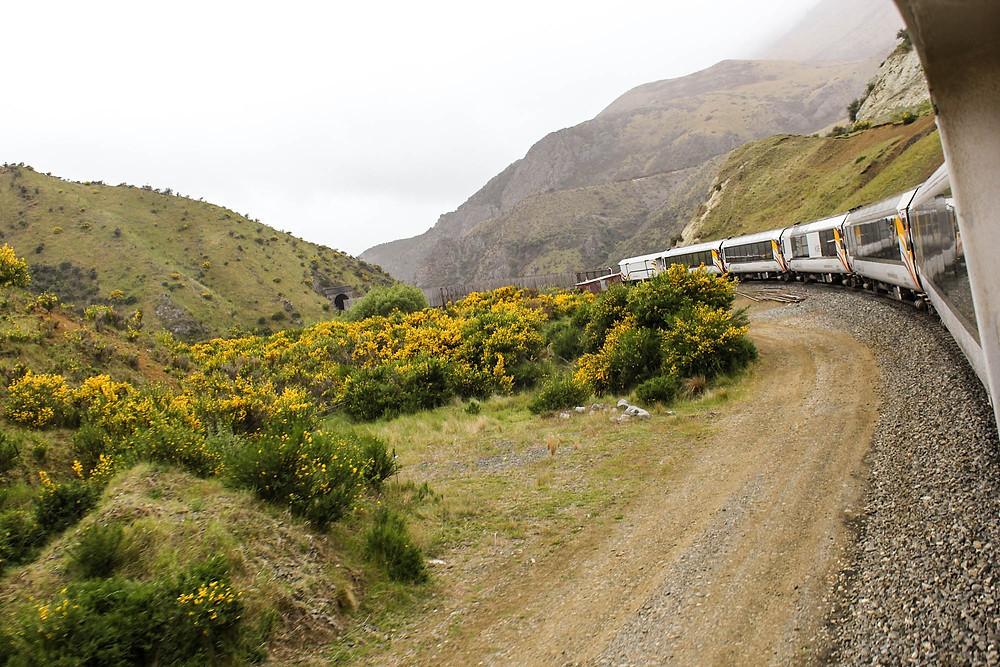 TranzAlpine - omtalt som en av verdens vakreste togreiser.