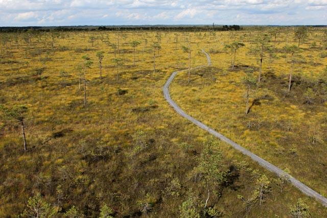 Det finnes turstier for dem som helst vil gå tørrskodd og på fast grunn ut i de estiske myrene. Bildet er tatt fra et utsiktstårn i Sooma nasjonalpark.
