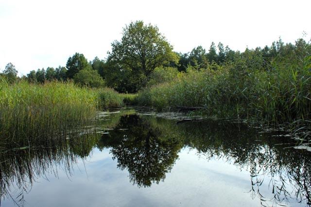 Store og små elver å utforske i Sooma nasjonalpark.