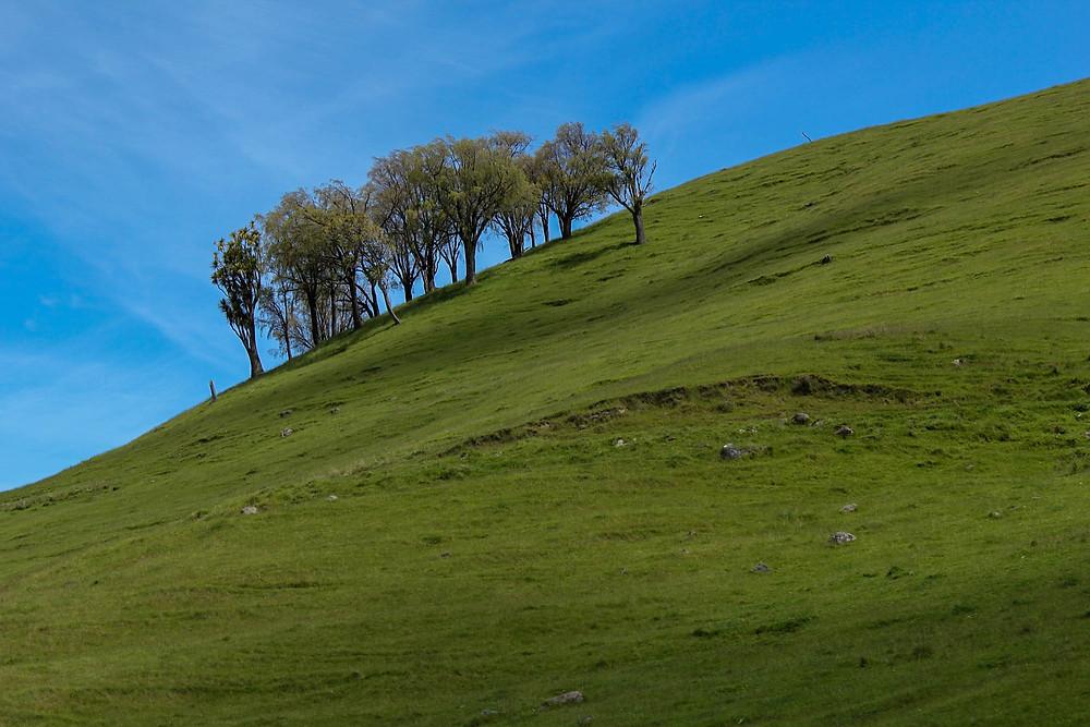 Mye fint landskap farer forbi når du kjører tog på New Zealand.