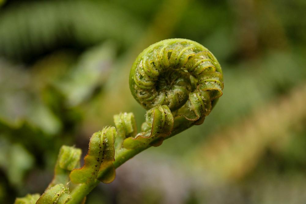 Vi er omgitt av frodiggrønt her i regnskogen i Hokitika.