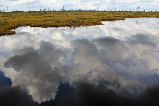 Vakkert på sin særegne måte, Sooma nasjonalpark i Estland.