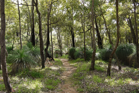 kyotmunga walk trail Perth
